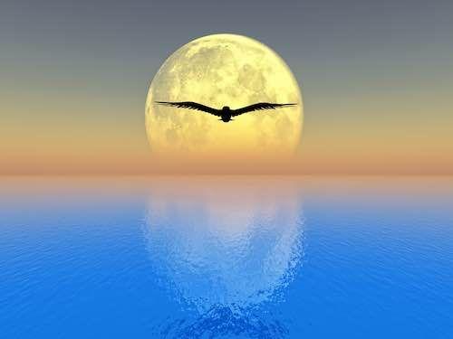 Pleine Lune du 12 novembre 2019