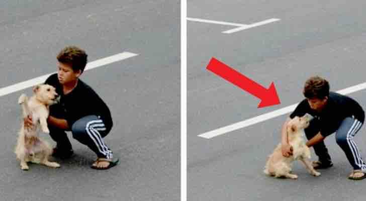 Quelquun-renverse-un-chien-sur-la-route